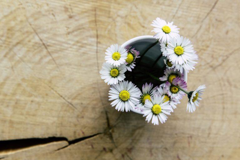 daisy-1542497_1920